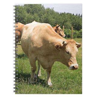 Caderno Espiral Vacas no campo, EL Camino, espanha 2