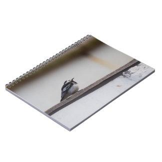 Caderno Espiral Wagtail Pied