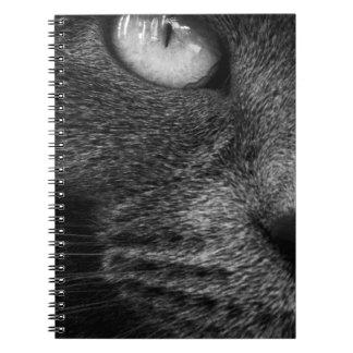 Caderno feroz do gato