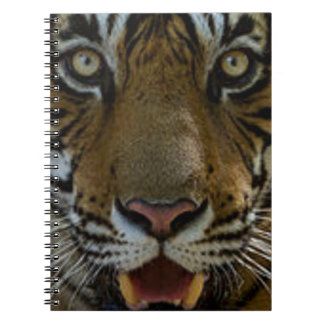 Caderno Fim da cara do tigre acima