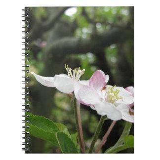 Caderno Flor cor-de-rosa da maçã no primavera. Toscânia,