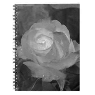 Caderno Flor cor-de-rosa do solteiro com gotas de água no