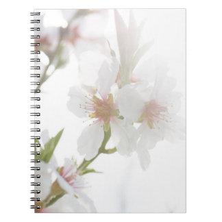 Caderno Flor da árvore de amêndoa