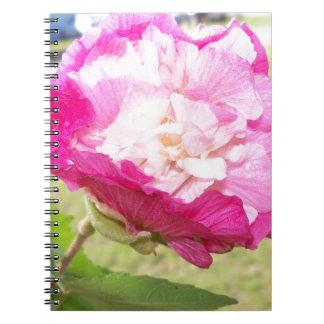 Caderno flor variável do rosa e a branca do hibiscus