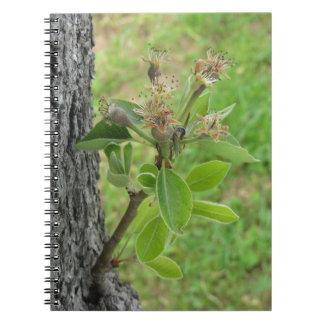 Caderno Galho da árvore de pera com os botões no primavera