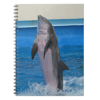 Caderno Golfinho de Mississippi, Florida