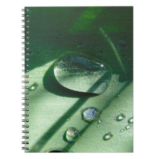 Caderno Gotas de orvalho em uma folha da tulipa