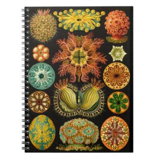 Caderno Ilustração 6.5X8.75 da vida marinha de Haeckel
