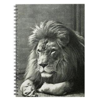 Caderno Ilustração do leão