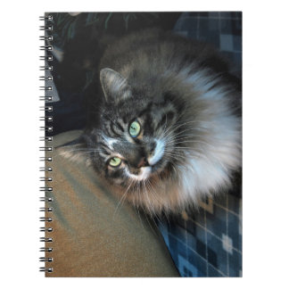 Caderno irresistível de Zorro do gato