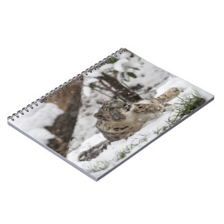Caderno Leopardo de neve curioso na neve