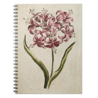 Caderno Lírio floral botânico de Guernsey do vintage