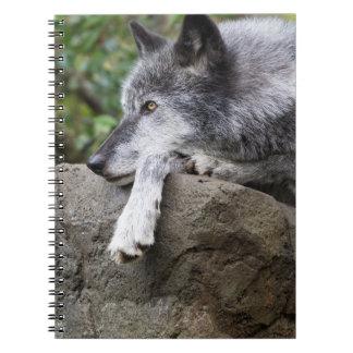 Caderno Lobo preto de relaxamento