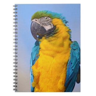 Caderno Macaw de Gelbbrustara na vara