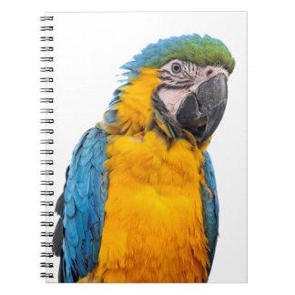 Caderno Macaw do azul e do ouro