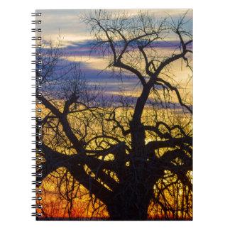 Caderno Madeiras da manhã