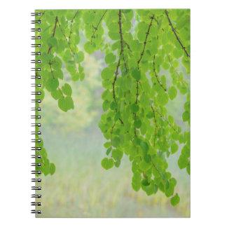 Caderno Membros de árvore de Katsura na primavera |