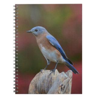 Caderno original do Bluebird