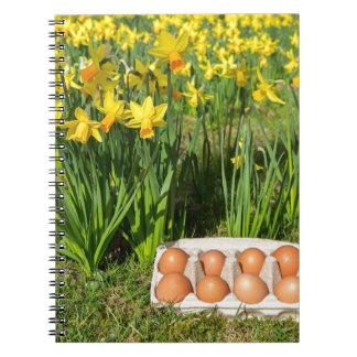 Caderno Ovos na caixa na grama com daffodils amarelos