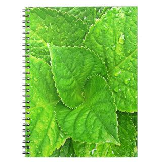 Caderno Para o amor da natureza