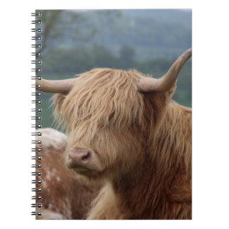Caderno retrato do gado das montanhas