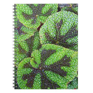 Caderno Rodgersia de florescência floral