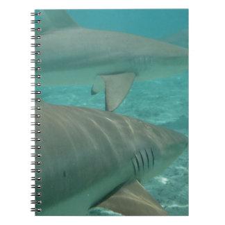 Caderno shark