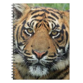 Caderno Tigre adulto