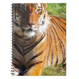 Caderno Tigre Malayan dos alugueres