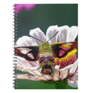 Caderno Traça de colibri