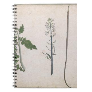 Caderno Uma planta de rabanete, uma semente, e uma flor