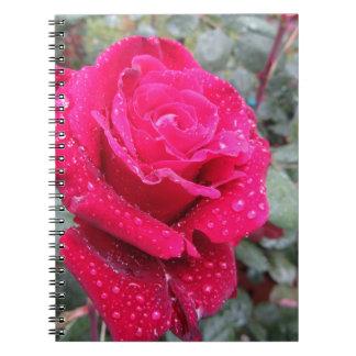 Caderno Única flor da rosa vermelha com gotas de água