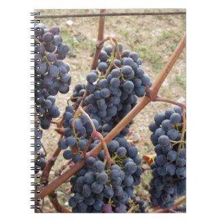 Caderno Uvas vermelhas na videira. Toscânia, Italia