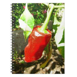 Caderno vermelho do capsicum