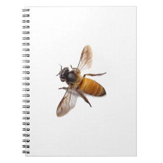 Cadernos Abelha do mel