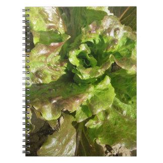 Cadernos Alface fresca que cresce no campo. Toscânia,