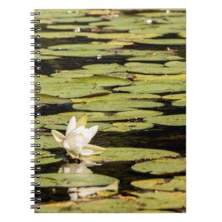 Cadernos Almofada de Lilly