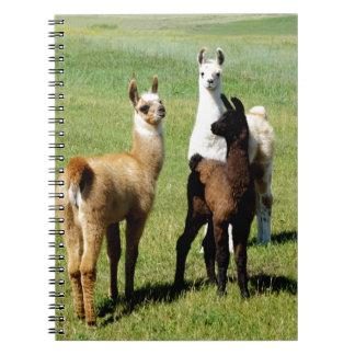 Cadernos Aproximação do lama do bebê