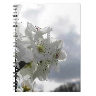 Cadernos Árvore de pera de florescência contra o céu