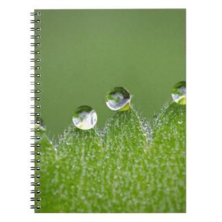 Cadernos As gotas da água da natureza conectam com o