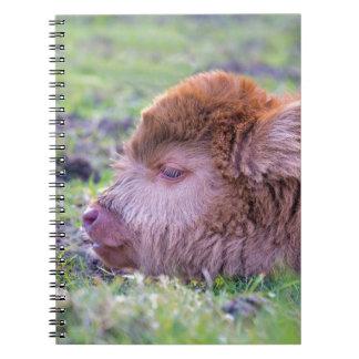 Cadernos Cabeça da vitela escocesa recém-nascida marrom do