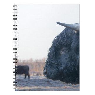 Cadernos Cabeça do escocês escocês do touro preto com vaca