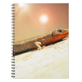 Cadernos Calor de Lizart