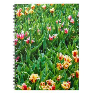 Cadernos Campo com as tulipas cor-de-rosa e amarelas