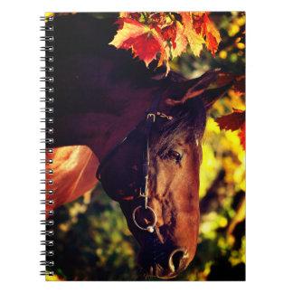 Cadernos cavalo do outono