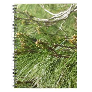 Cadernos Cones imaturos do homem ou do pólen do pinheiro