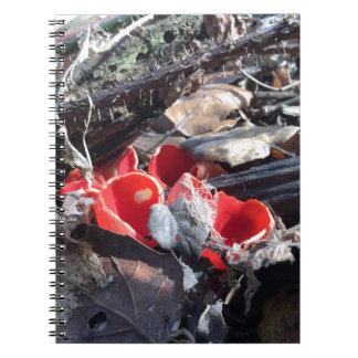 Cadernos Copos e folhas vermelhos
