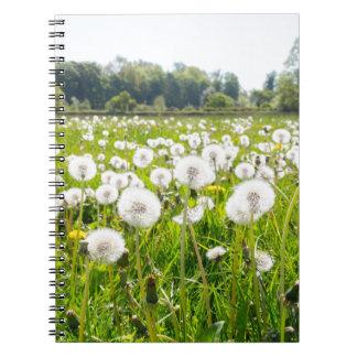Cadernos Dentes-de-leão descomedidos no prado holandês