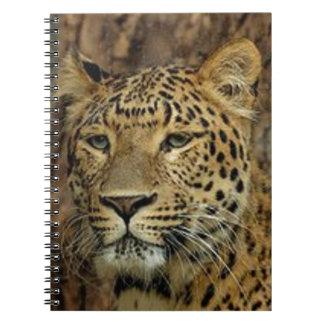 Cadernos Desengaço da pantera