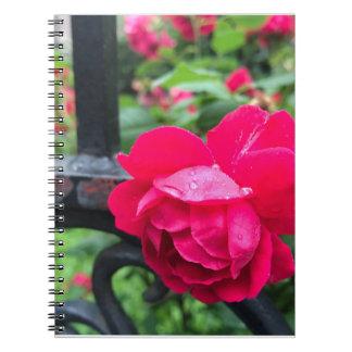Cadernos Dia chuvoso NYC dos rosas da flor do rosa do rosa